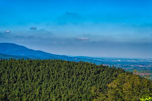 View towards Obernai
