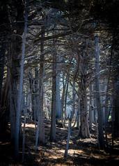 Del Monte Forest No.1