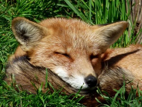 Schöne Träume ! / Sweet dreams !