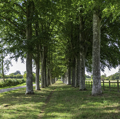 Chemin vert 1 - Photo of Saint-André-de-Briouze