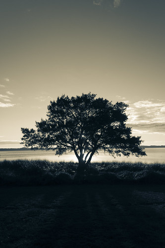 Solitary tones