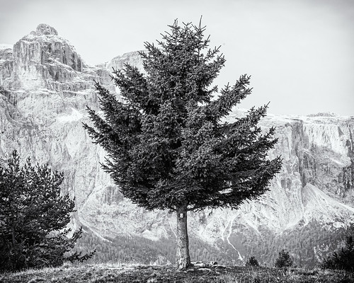 The Tree and the Mount (I)...
