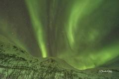 Las Luces del Norte bailan entre montañas Senja Norte de Noruega