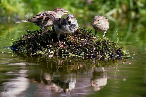 Sparrow Island
