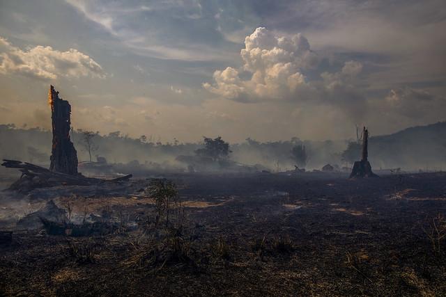 Incendios en la Amazonia son una señal vergonzosa de nuestro afán por excesos