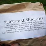 perennial shallot