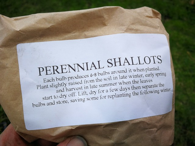 perennial shallot seeds belonging to shiny