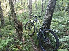 Stuck in the bush, Kykkelsrud, Askim, Indre Østfold, Norway