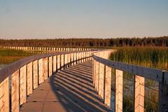 Greenwich National Park boardwalk at dusk