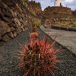 Lanzarote Cactus Garden by Rob Draper