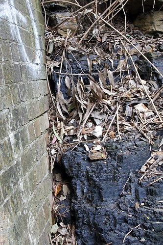 Coal seam at entrance to Ferneligh Track Tunnel