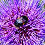 Pollination by Paul Seymour
