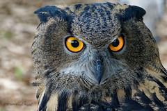 Look Deep Into My Eyes ---You are getting very sleepy..........