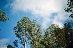 Nice cloud and nice trees
