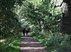 Sherwood Forrest