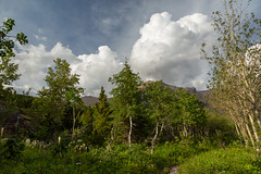 Image by Ken Krach Photography (kjkmep) and image name Montana View photo  about Liked this combination of bear grass, trees, mountains, and clouds there in Glacier National Park.
