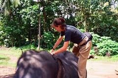 Jazda oklepem na słoniu!