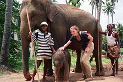 Sierociniec słoni