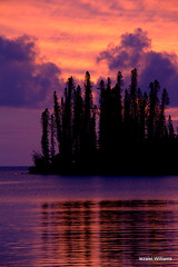 Image by iezalel7williams (181765699@N08) and image name Pine trees and reflection at sunset IMG_0141 photo