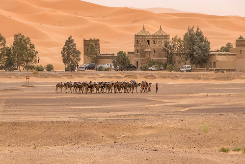 Chameliers - Merzouga, Marroco