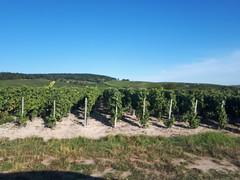 20190914_175245 - Photo of Châtillon-sur-Marne