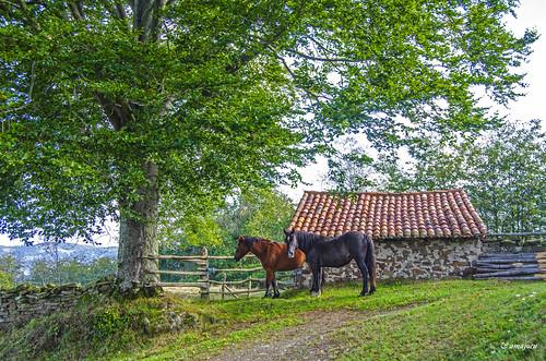 Un rincón de Asturias