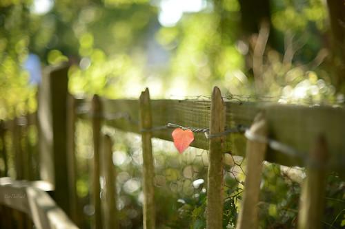 September Heart...