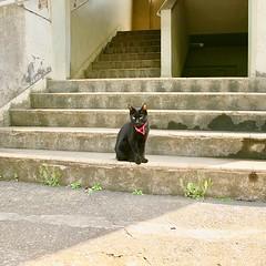Black cat sitting on steps 階段の黒猫 #cat #猫 #ネコ #ねこ #blackcat #黒猫 #schwarzeKatze #chatnoir #gattonero #gatonegro #atratafeles #Katze #chat #gatto #gato #feles#кошка #KAT #gato #Kucing #Кіт #kissa #котка #Mèo #Kot #고양이 #貓 #kočka #kass#муур #pisică