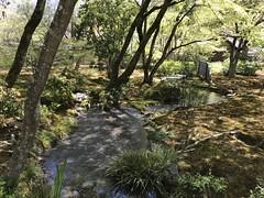 More fantastic landscaping at the Tenryu-ji Zen temple