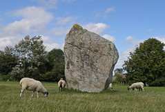 Sheep and Stones. Avebury, Wiltshire