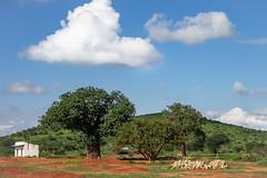 2019 Kenia, Tsavo West N.P.