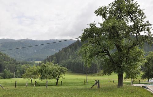 Niederösterreich Mostviertel Moosau_DSC0357