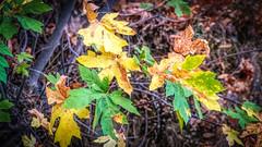 1st Fall Colors Sunol Regional Wilderness Area