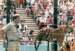 1984_Family_Activities_1984_0017_a Tiger in circus