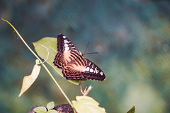 Beautiful winged butterfly resting on a leaf