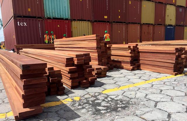 Amazônia em chamas: 90% da madeira exportada é ilegal, diz Polícia Federal