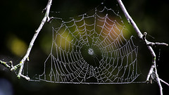 Spider Web with Fog Droplets