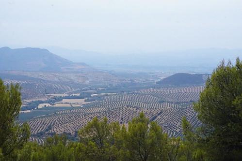 Bruma en la Vega de Granada