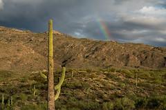 Saguaro & Rainbow - Saguaro National Park - Tucson, AZ