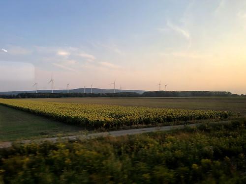 Sunflowers and wind turbines