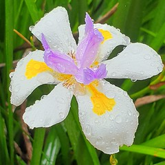 my beautiful best flower photos