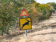 Caution Kudu Crossing Sign - Zimbabwe