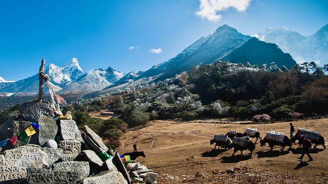 Auf dem Weg zum Basislager des Mount Everest, beim Kloster Tengpoche mit Ama Dablam, 6856 m.