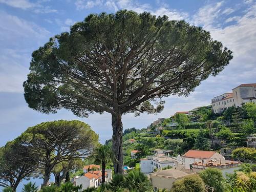 Ravello, along the Amalfi Coast (3)