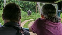 Watching Elephant