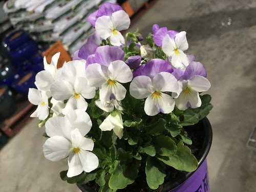 """Cheap But Pretty """"Potted Colour"""""""