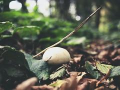 Mushroom Bokeh | 18. September 2019 | Tarbek - Schleswig-Holstein - Deutschland