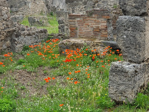Wildflowers at the ruins of Pompeii (2)