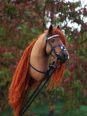 Hobbyhorse by Eponi (attribution required)