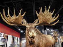 Maxine & Jesse Whitney Museum, Valdez, Alaska